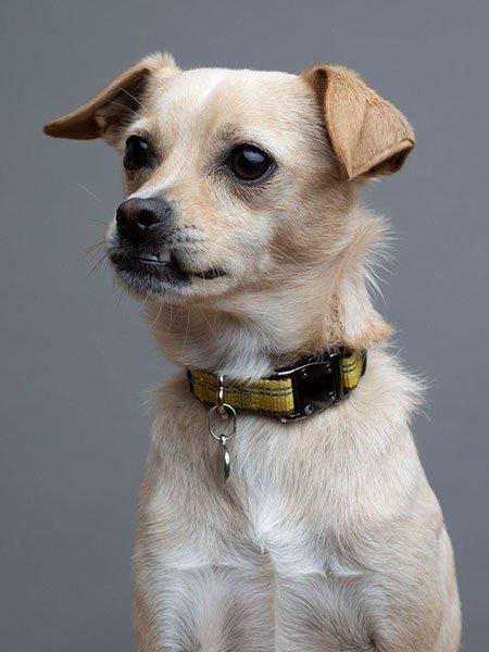 presto-the-dog